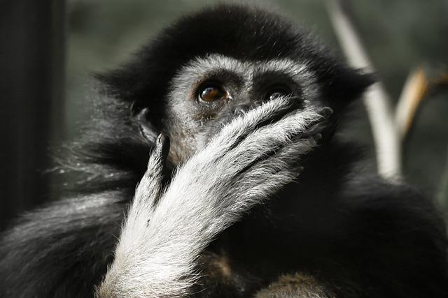 surprised monkey.jpg